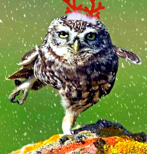 Christmas Dancing Owl