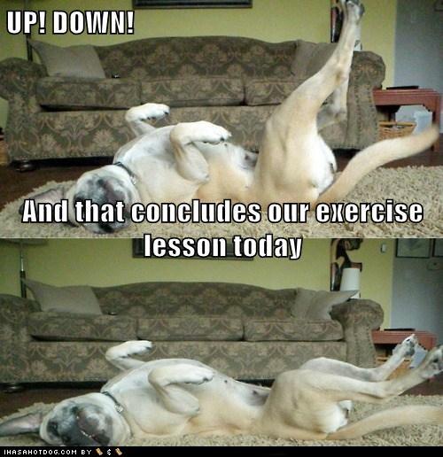Doggie Exercise
