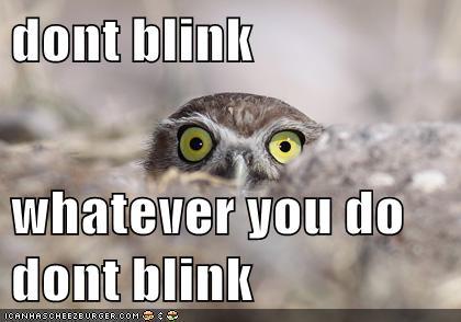 Don't Blink Owl