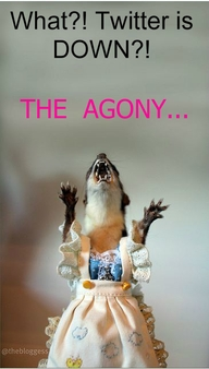 Juanita the Taxidermied Weasel, Courtesy of the Bloggess