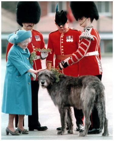 Sir Oberon Getting His Knighthood