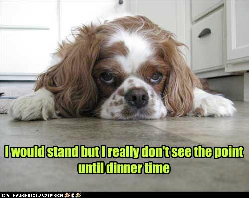 Dinner Time Doggie