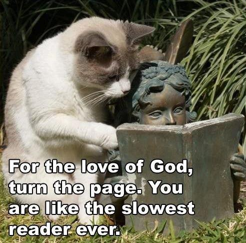 Kitty and Statue Book