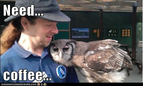 Need Coffee Owl