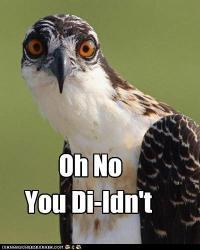 Oh No Bird