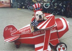 Fourth of July Doggie 2