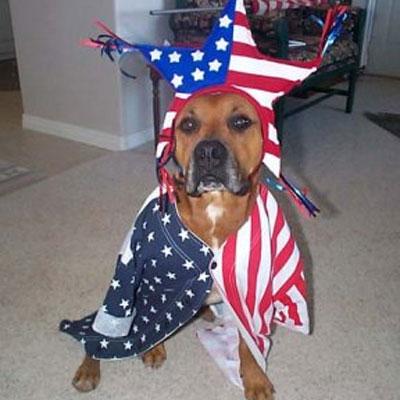 Fourth of July Doggie 3