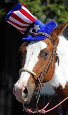 Fourth of July Horse