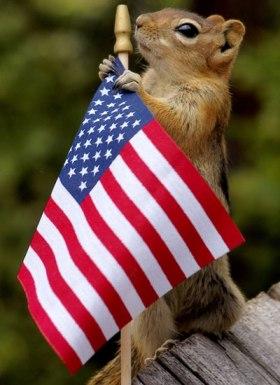 Fourth of July Squirrel 2