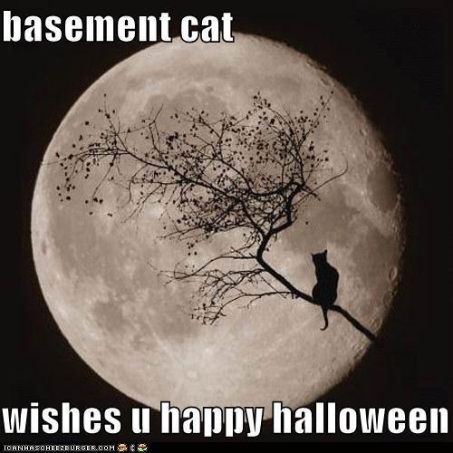 Halloween Basement Cat