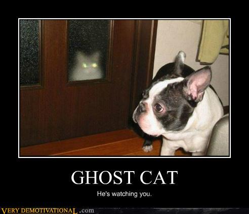 Halloween Ghost Cat