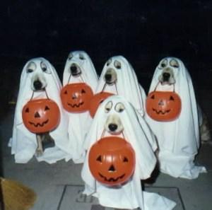Halloween Ghost Doggies
