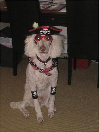 Halloween Pirate Doggy