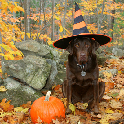 Halloween Witch Doggy