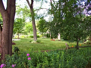 Garden Envy Buried Under Books