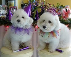 New Year's Doggies