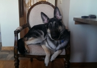 The real-life Gnarly on his throne.