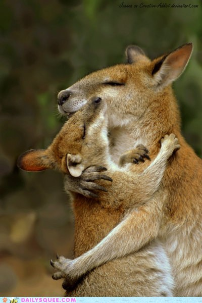 Mother's Day Kangaroos