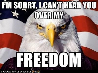 Fourth of July Bald Eagle