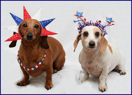 Fourth of July Doggies