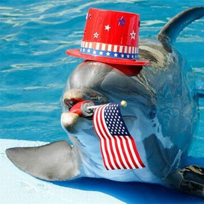 Fourth of July Dolphin