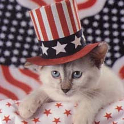 Fourth of July Kitty 3
