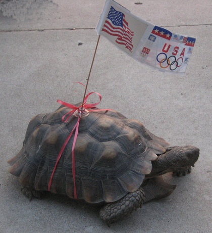 Fourth of July Turtle