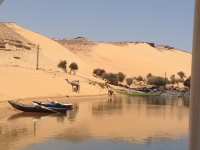 Camels and the Nile Near Aswan