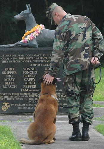 Veteran's Day Doggie Memorial