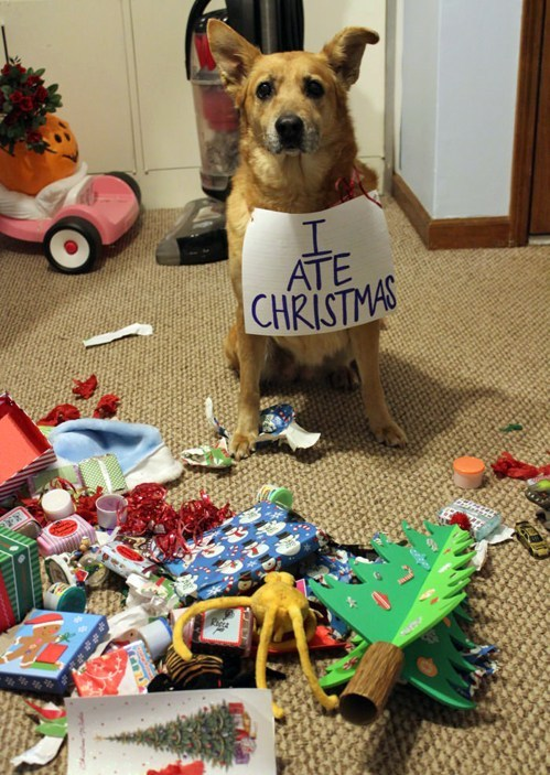 Christmas Doggie 7