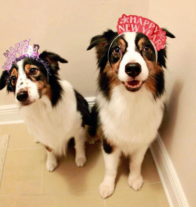 New Year's Doggies 4