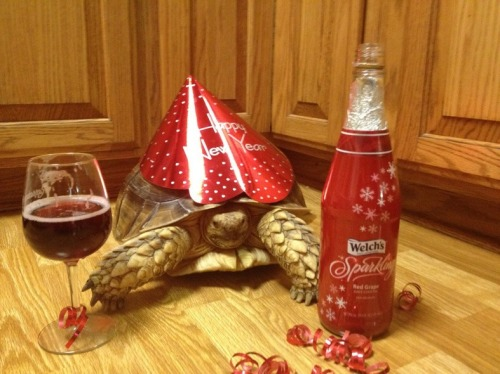 New Year's Turtle