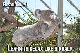 New Year's Koala