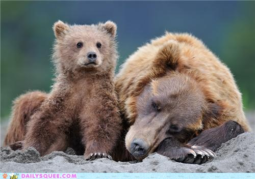 Mother's Day Bears 2