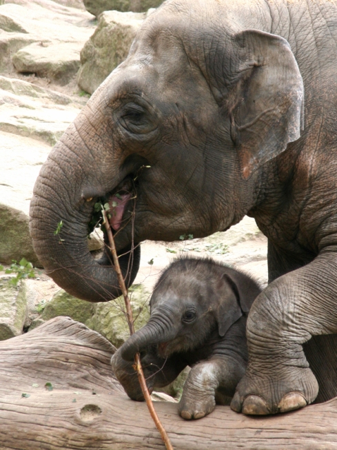 Mother's Day Elephants