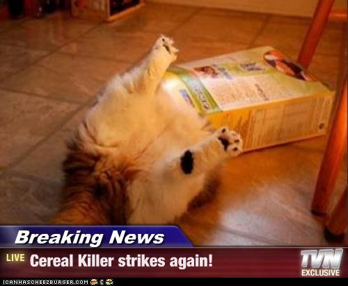 Cereal Killer Kitty
