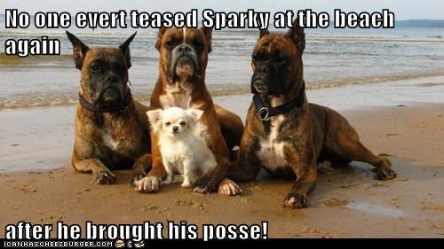 Doggie Posse