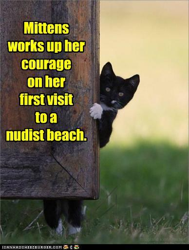 Nudist Kitty