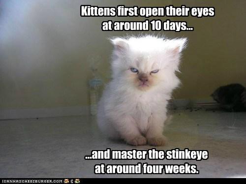 Stinkeye Kitty