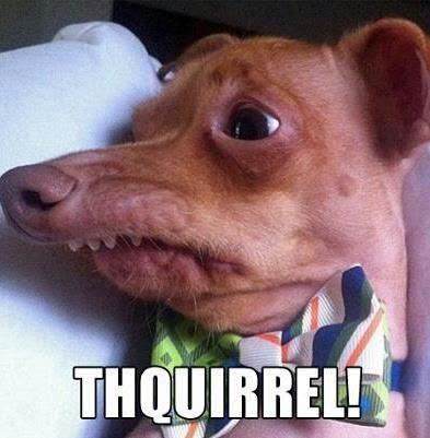 Thquirrel Doggy