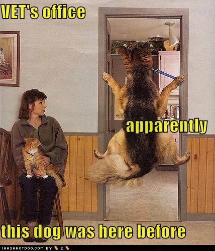 Vet's Office Doggie