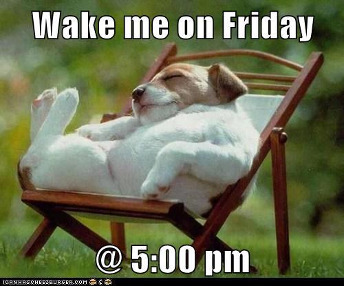 Wake Me On Friday Doggie