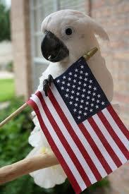 Fourth of July Bird
