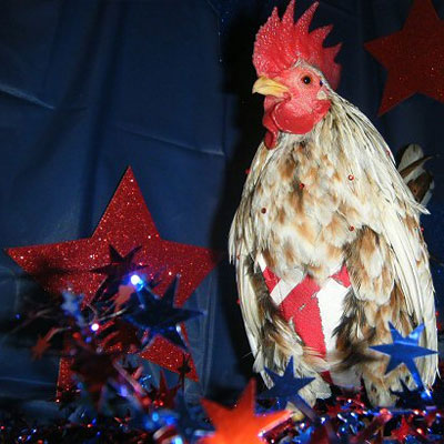 Fourth of July Chicken
