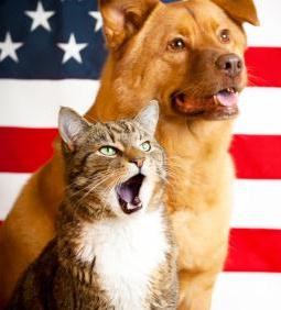Fourth of July Kitty and Doggie