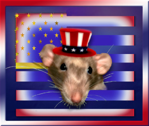 Fourth of July Rat 2