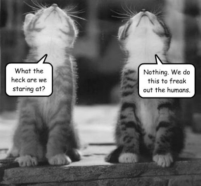 Kitties Conspiracy