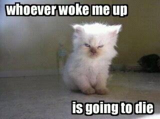 Grumpy Kitty Woke Up