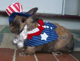 Fourth of July Bunny 2