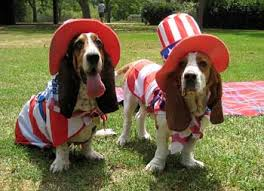 Fourth of July Doggies 3